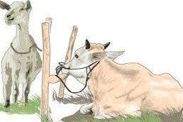 gambar hewan qurban