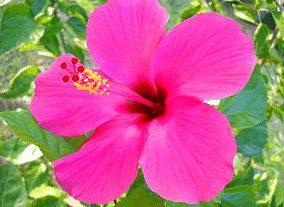 gambar macam-macam bunga