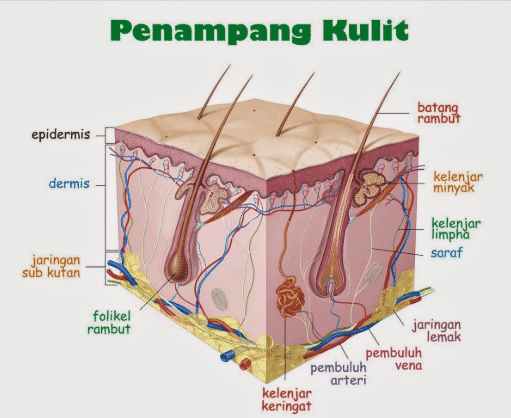 Indra Peraba