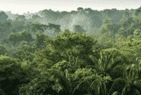 iklim tropis