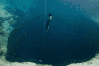 Palung Laut