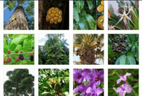 Pengertian Flora
