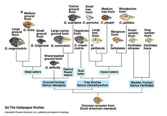 burung Finch di Kepulauan Galapagos