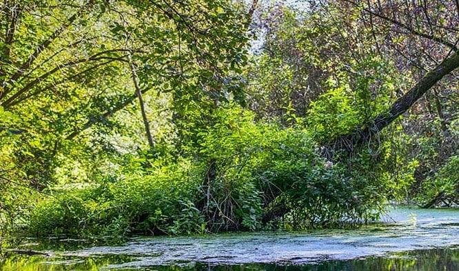 Hutan Gambut