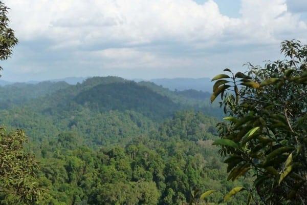 Hutan Pegunungan
