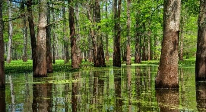 Hutan Rawa