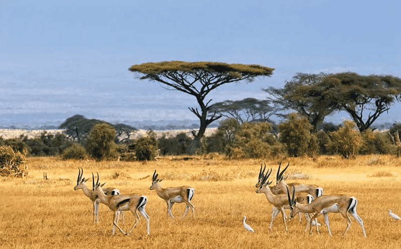 Hutan Savana
