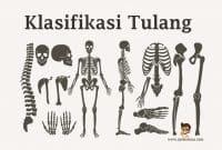 Klasifikasi-Tulang