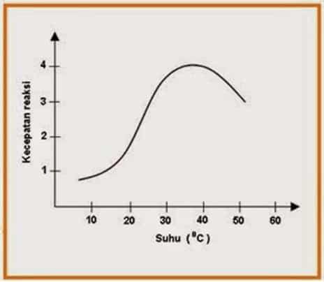 Pengaruh suhu terhadap aktivitas enzim