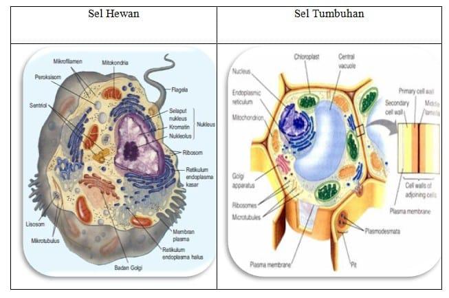 sel tumbuhan dan sel hewan
