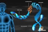 Pengertian-dan-Subtansi-Genetika-Pada-Manusia
