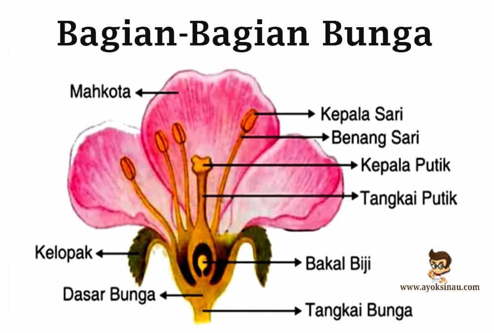 Bagian Bagian Bunga Pengertian Struktur Proses Fungsi