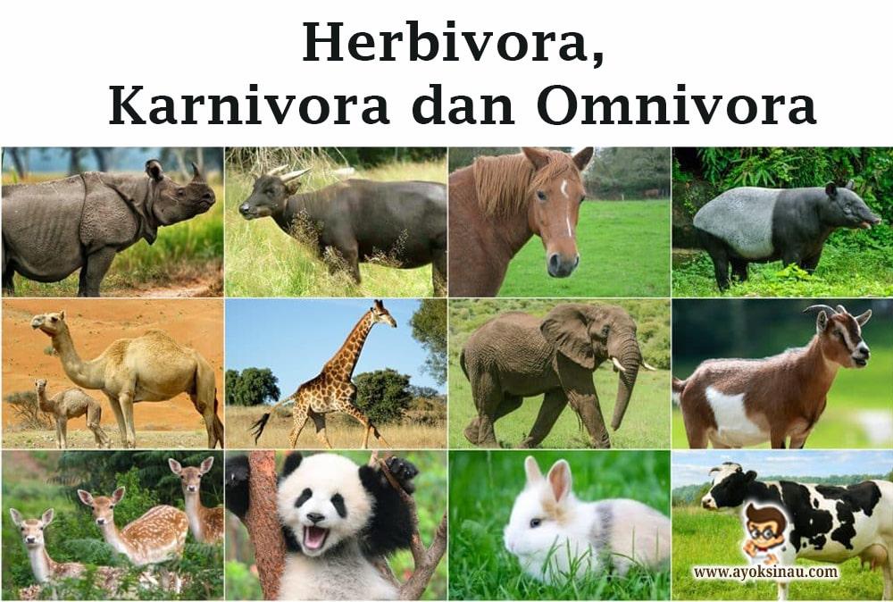 Herbivora, Karnivora, Omnivora